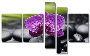Фиолетовая орхидея на камнях