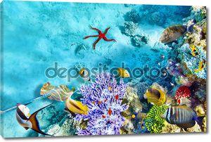 Подводный мир с кораллами