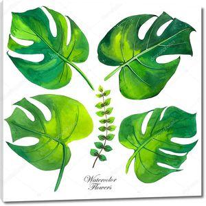 Тропические листья на белом фоне