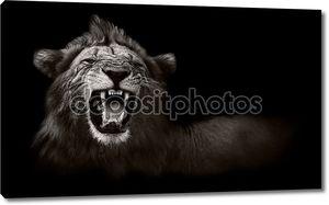 Лев, отображение опасные зубы