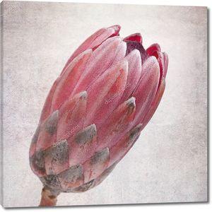 Вытянутый розовый бутон протея