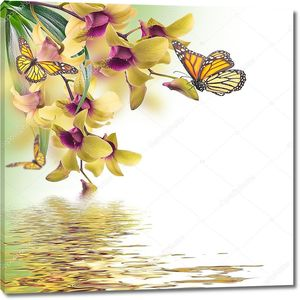 Тропические орхидеи над водой