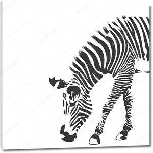 иллюстрация зебры в черно-белых тонах