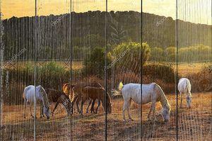 Лошади пасутся на фоне заката
