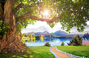 Дорога к озеру мимо дерева