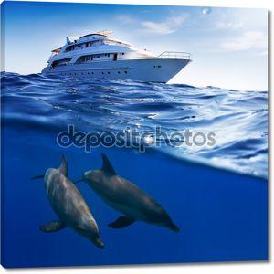 Подводный Расщепленного шаблоном ватерлинии. Два бутылконосых дельфинов плавание под лодкой
