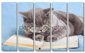 Бизнес Кот чтения ноутбук