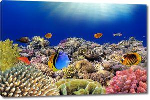 подводный мир. коралловых рыб Красного моря. Египет