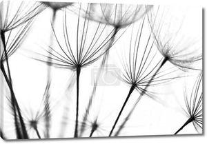 Абстрактные макро фотография семян растений. Черный и белый