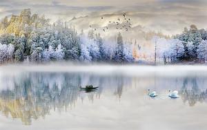 Белый лес по берегу
