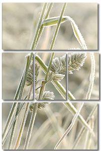 Трава покрыта морозом