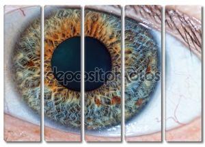 Человеческий глаз. макрос
