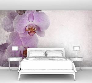 Ветка орхидеи слева