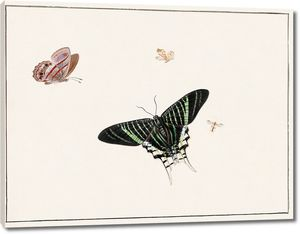 Герман Хенстенбург. Три бабочки и оса