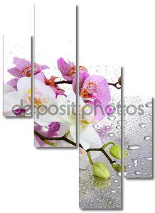 Розовая и белая орхидеи