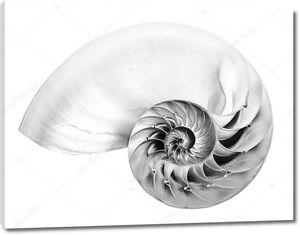 Черно-белая фотография половинчатой оболочки камерного наутилуса