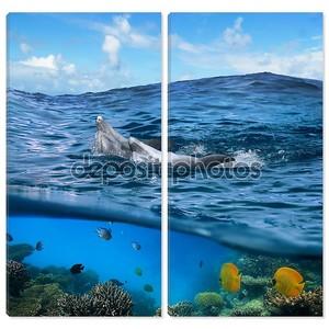 Пара счастлива игривый дельфинов плавание его обратно на волне