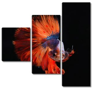 Рыба с ярким хвостом