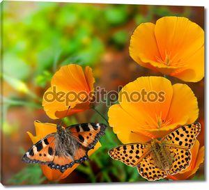 Бабочки на цветах желтых