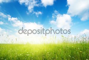 Поле цветов и солнечного света