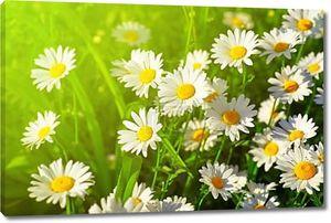первоклассный цветок на зеленом лугу