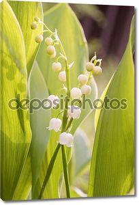Цветок ландыша