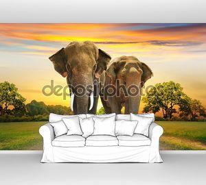 Пара слонов на закате