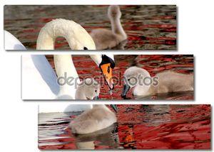 Мать лебедя и ее молодой