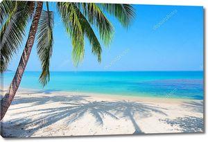 Пляж и тени от пальмы