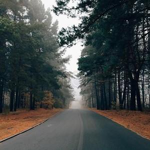 Осенний пейзаж с красивая дорога с зелеными деревьями