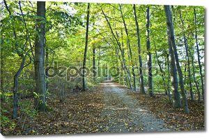 Красивые дикие дубовый лес