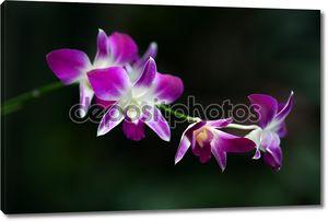 цветочное цветение орхидеи