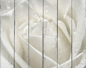 Макрос белой розы с каплями