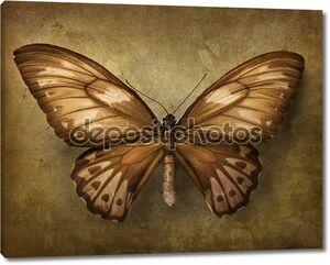 Старинный фон с бабочкой