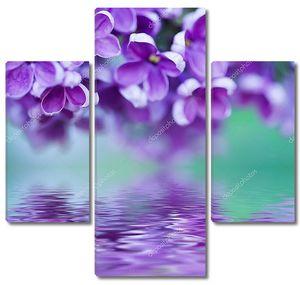 Сиреневые цветы над водой