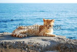 кошка в Кадис