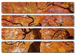 Крона осеннего дерева