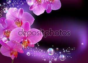 Орхидея с пузырями