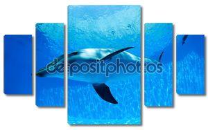 Дельфин нырнул под воду