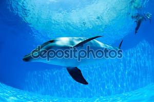 Дельфин плавает под водой