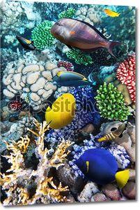 Рыбы среди кораллов в Красном море