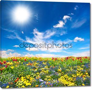 Клумба. красочные цветы над голубое небо