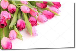 Розовые тюльпанчики
