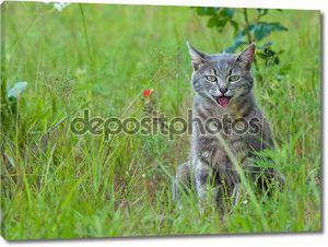 Синий Полосатый кот, задыхаясь в жаркую погоду
