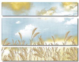 Пшеница в пасмурную погоду