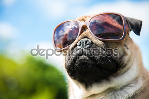 собака швабры