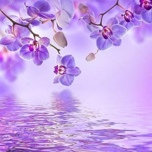 Веточки орхидей над водой