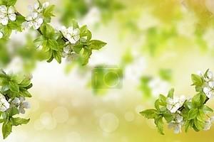 Цветущая ветвь яблоко. Яркие красочные Весенние цветы