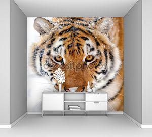 Сибирский тигр на снегу