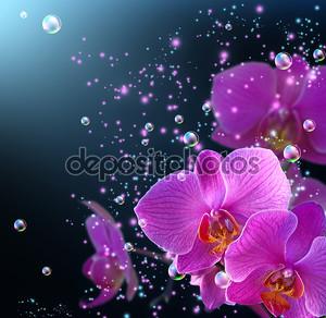 Орхидея и бабочка